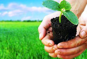 کود نانو کشاورزی